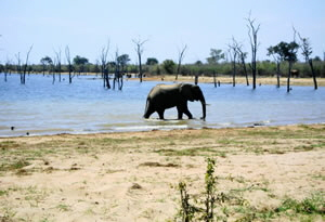 Elephant alonng the waters edge - Kariba Zimbabwe